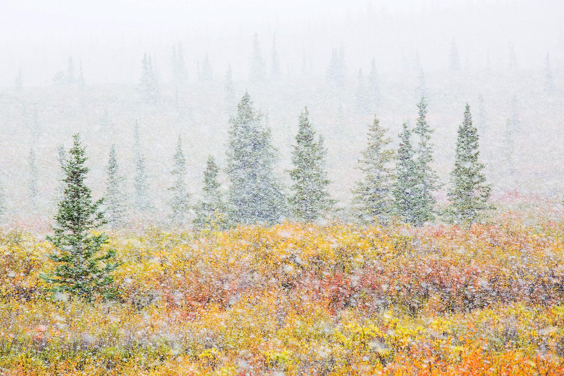 Landscape_autumn_meets_winter