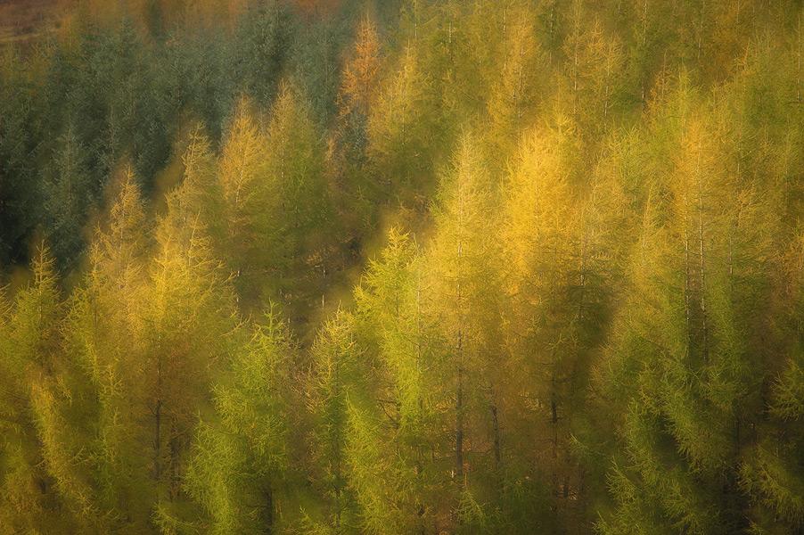 autunno-8-1