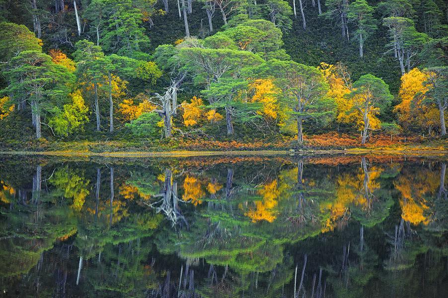 autunno-macchie-gialle