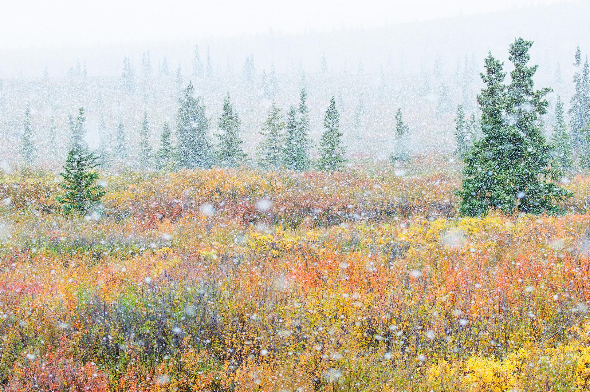 Landscape_Alaska_Autumn1