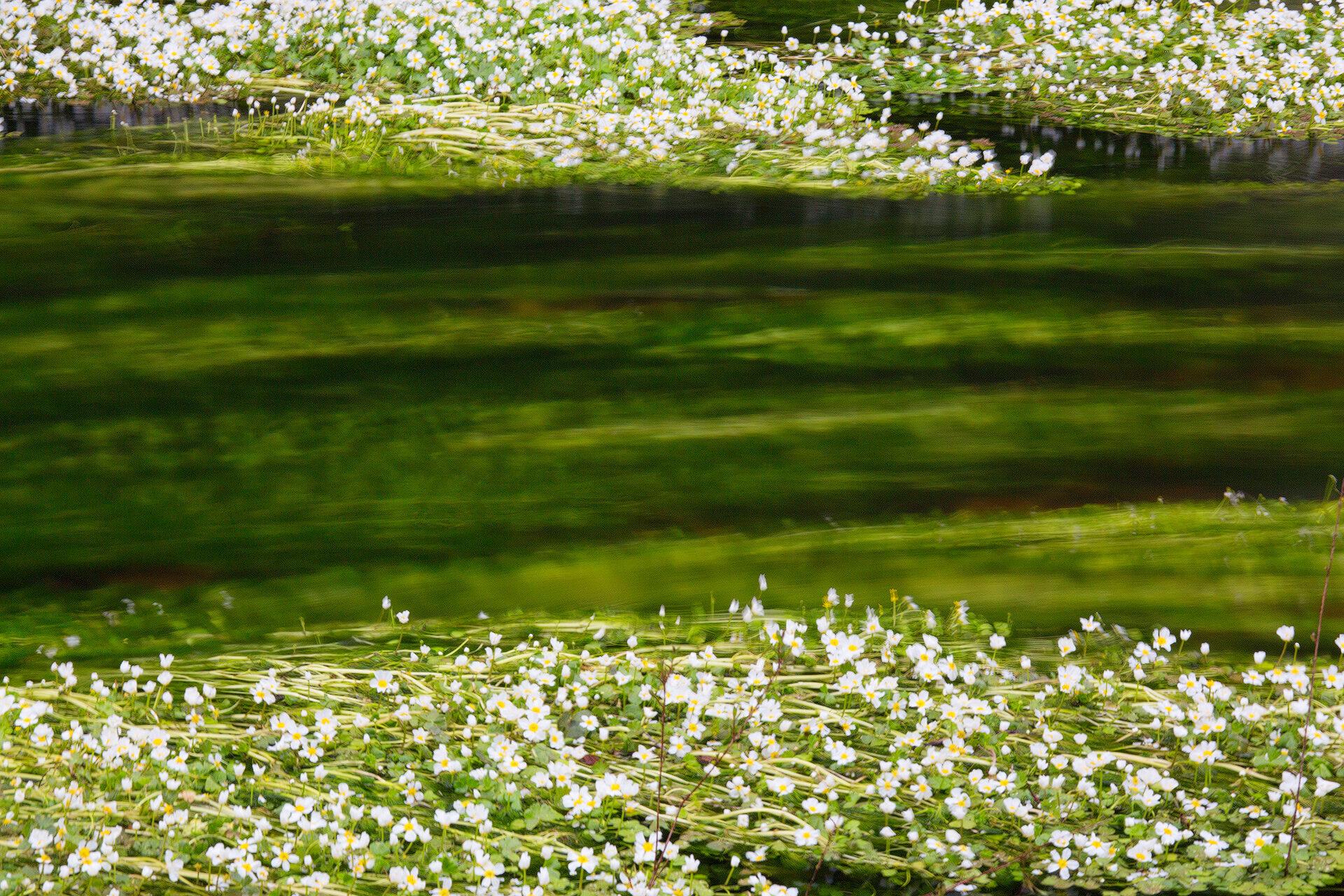 Picocca river. Sardinia. impressions spring