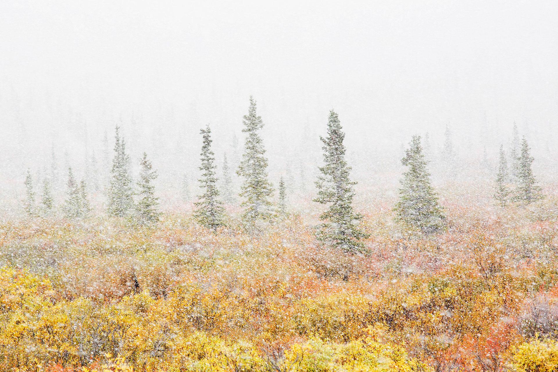 k5_alaska_autumn_blizard